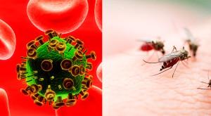 Anticorpos e Mosquitos da Malária